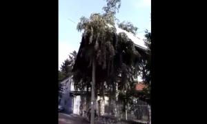 ŠOKANTAN PRIZOR U SRBIJI! Niko ne sme DA IZAĐE IZ KUĆE zbog OVE POŠASTI! (VIDEO)