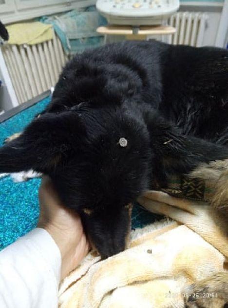 SPANS: Psu u glavu zaboden ekser dužine pet centimetara