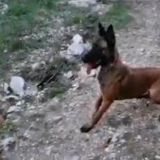 SPASAVALA LJUDE IZ RUŠEVINA U HRVATSKOJ, A ONI JE OTROVALI: Vlasnik u suzama, umrla mu na rukama! (FOTO/VIDEO)