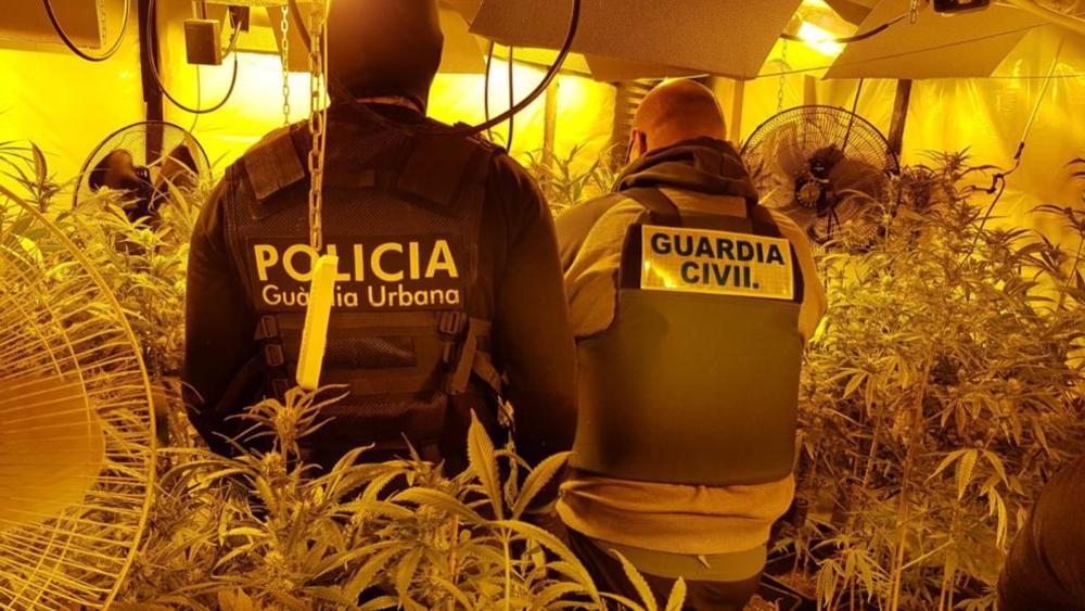 SRBI UHAPŠENI U ŠPANIJI: Plantaže marihuane potpuno pokrivene video-nadzorom i detektorima pokreta čuvali i psi!