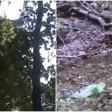 SRPSKA ŠUMA U KOJOJ STABLA SAMA UMIRU: Jedina prašuma u zemlji, a potrebna vam je DOZVOLA da kročite na njeno tlo (VIDEO)