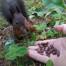 ŠTA JOJ BI? Veverica je grickala zrnevlje iz njegove ruke, a onda se dogodilo nešto VEOMA ČUDNO! (VIDEO)