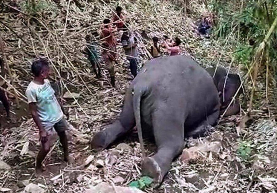 STRADALI OD UDARA GROMA U zaštićenom rezervatu u Indiji pronađeno 18 mrtvih slonova VIDEO