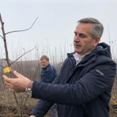 Sadnjom ovog voća ulažete u svoju budućnost: Deficitarni na srpskom tržištu, a zarada – nekoliko hiljada evra (FOTO)