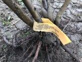 Sadnjom ovog voća ulažete u svoju budućnost: Zarada po hektaru - nekoliko hiljada evra FOTO