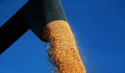 Saković: Cenu kukuruza podigli finansijski fondovi