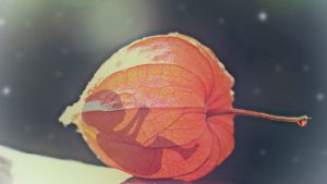 Šansa za roditeljstvo: Omogućiti donaciju embriona