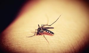Virus koji prenose komarci odneo još šest života u Srbiji