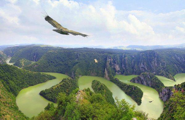 Sjenica / Razmatra se zabrana letova iznad Uvca zbog bijeloglavih supova