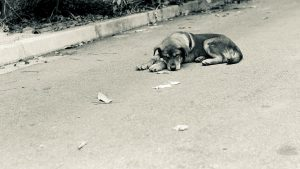 Skupe i komplikovane procedure za prijavu trovanja životinja