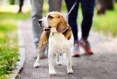 Skupljaće pseći izmet i nosiće ga na DNK analizu VIDEO