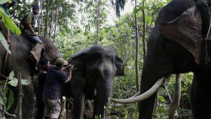 Slon za mesec danas usmrtio 14 ljudi u Indiji