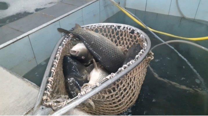 Smanjena potražnja za ribom