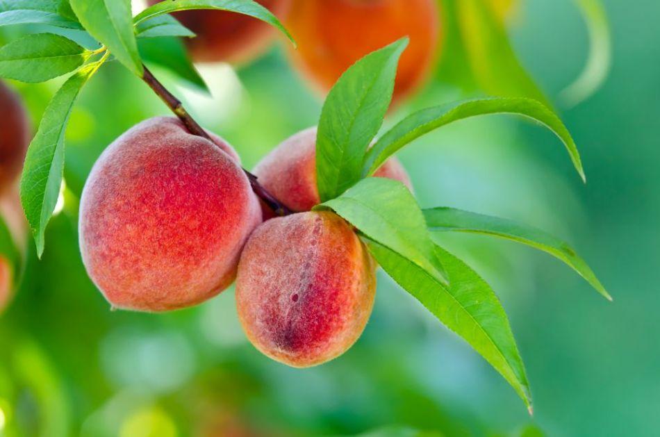 Sočno je, ukusno i zdravo! Otkrijte zašto je još dobro da jedete ovo slatkasto voće