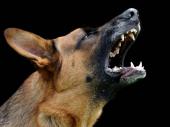 Šok u Nišu: Siledžija pretukao dve starice zbog psa!
