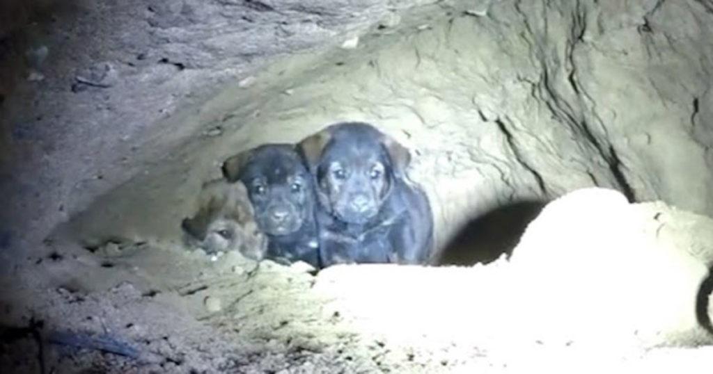 Spasioci su izvukli 8 psića iz pećine. Nakon što su mislili da su završili, čuli su novi zvuk iz pećine!