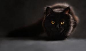 Spremite maramice: Ovo je najpoznatiji crni mačak na Zvezdari - evo i zašto! (FOTO)