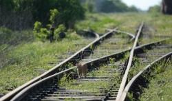 Srbija Kargo: Na delu pruge Trnavac-Brus iskliznulo osam praznih cisterni, nema povredjenih