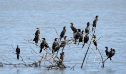 Srbija usvojila sporazum o zaštiti ptica selica
