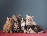 Šta bi trebalo da znate pre uzimanja mačke?