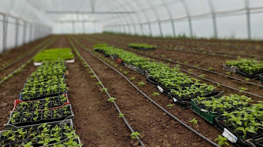 Šta muči povrtare i zašto kasni povrtarska proizvodnja?