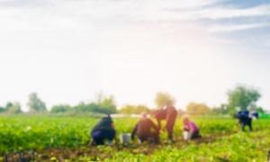 Stiže investicija od 30 miliona evra: Izraelske kompaniju ulažu u srpsku poljoprivredu
