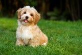 Stravično nasilje nad životinjama: Pijan mladić nožem preklao psa