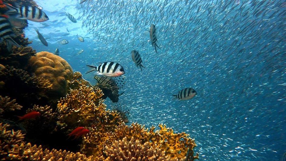Stručnjaci upozoravaju: Ubrzava se rast nivoa okeana