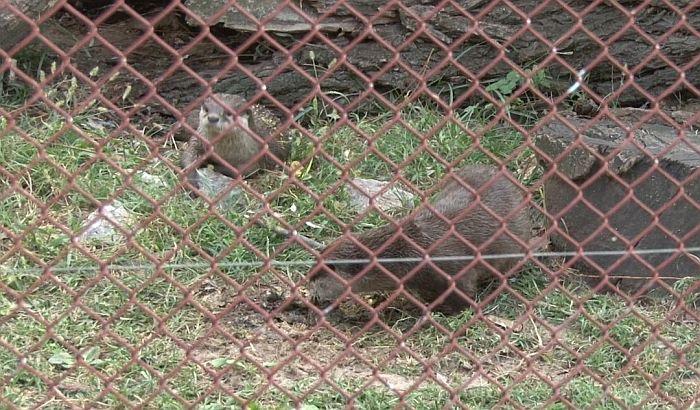 Subotica: Novi stanari Zoo vrta