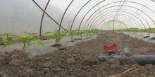Subvencije za mitrovačke povrtare