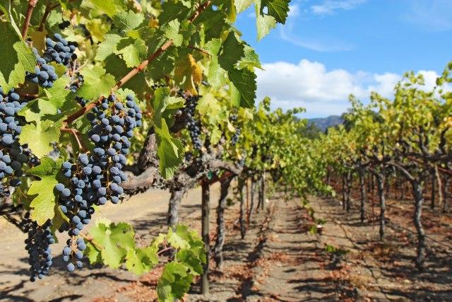 Subvencije za poljoprivrednike: Više novca za vinare i organske proizvođače