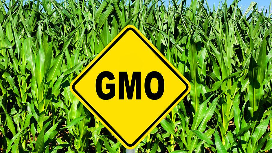 Sud EU presudio u korist Italijana koji je sadio GMO kukuruz
