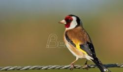 Sud u Subotici izrekao kaznu od 150.000 dinara zbog držanje divljih ptica