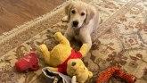 Sukob Amerike i Kine: Zašto je ova fotografija Pompeovog psa naljutila Kineze