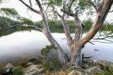 Šume koje stvaraju udovice: Svi žele da ih vide, niko ne sme da im priđe