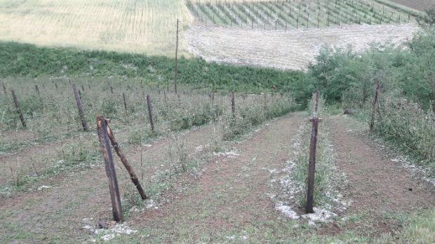Vanredna situacija u selima pogođenim nevremenom – velika šteta u voćnjacima