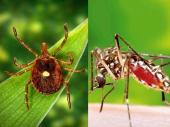 Suzbijanje komaraca u Vranju