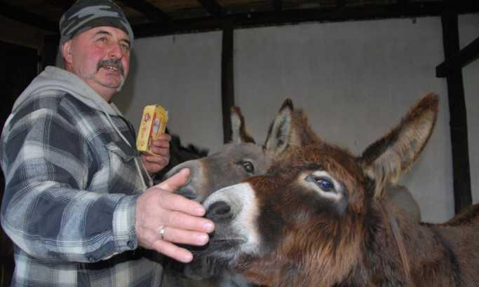Sva ušteđevina za farmu magaraca