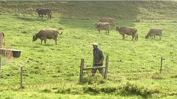 Rts Svajcarske Lekcije Iz Ruralnog Razvoja