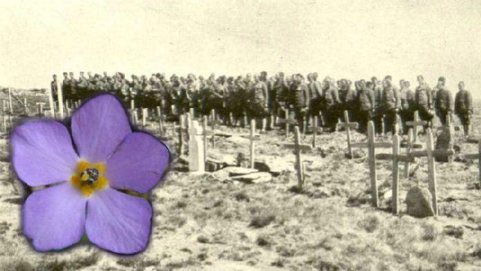 Svet slavi 100 godina od Dana primirja u Prvom svetskom ratu