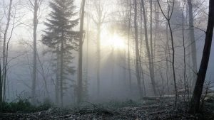 Svetlosna terapija protiv zimske depresije