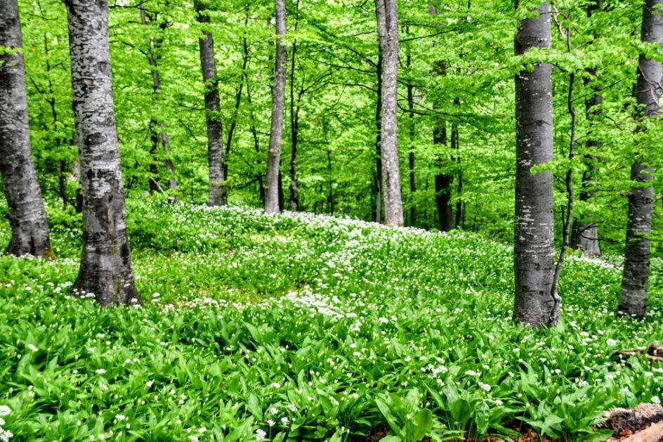 Svetski dan zaštite životne sredine - u Srbiji zaštićeno 7,6 odsto teritorije