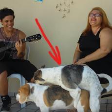 Svirali su romantičnu pesmu, koja je pogodila ovog psa! Umesto romantike, usledio je SEKS! (VIDEO)