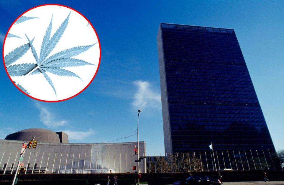 TRAVA VIŠE NIJE ILEGALNA: UN je uklonio medicinsku marihuanu sa liste najpoasnijih droga