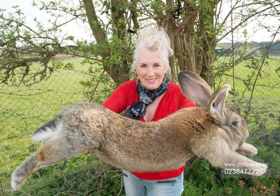 TRAŽI SE DARIJUS: Najveći zec na svetu ukraden, očajna vlasnica nudi 1000 funti nagrade