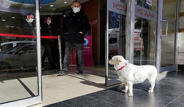 Ta divna stvorenja: Verna kuca 7 dana čekala vlasnika pred bolnicom