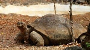 Tajanstvena krađa 123 kornjače na Galapagosu