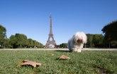 Top-deset dog friendly gradova Evrope, 1.deo