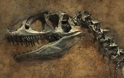U Japanu otkriven skelet nove vrste dinosaurusa
