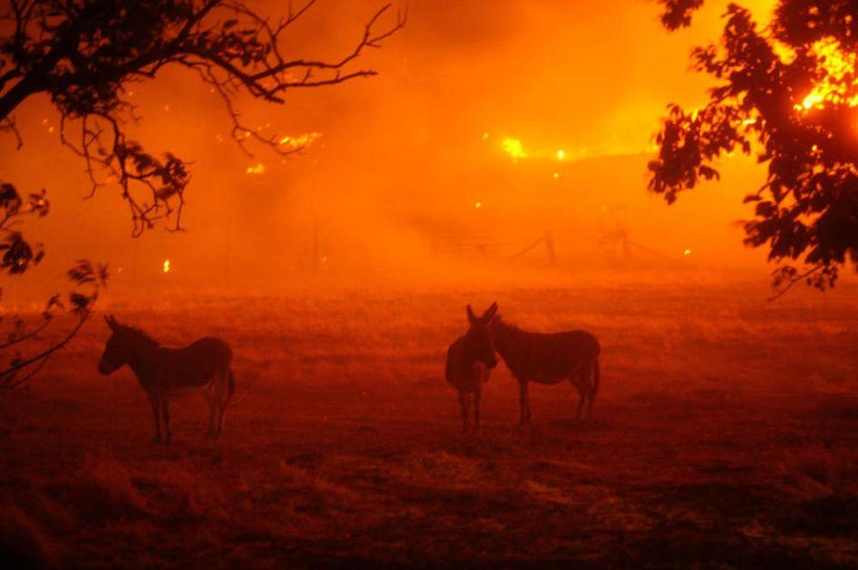 U KALIFORNIJI PAKAO NA ZEMLJI: Rekordne vrućine od skoro 55 stepeni, požari već uništili 48.500 hektara, nestala struja